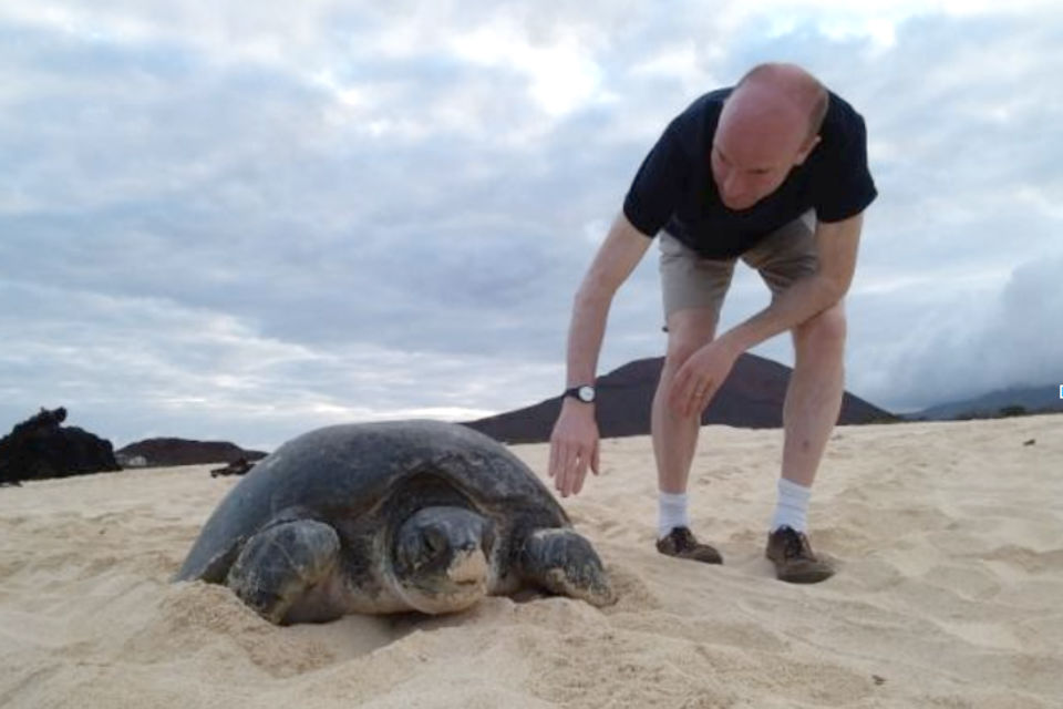 Man in shorts on beach with sea turtle