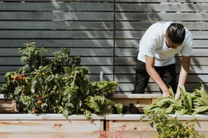 Image of man gardening to promote COP 26