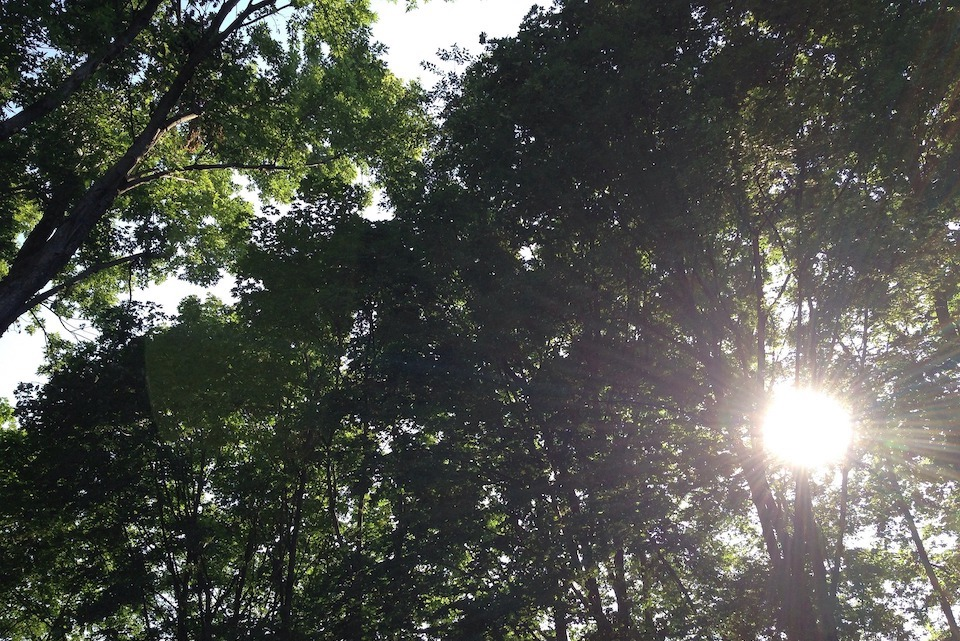 Image of sunshine breaking through trees